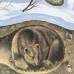 Почему медведь зимой спит