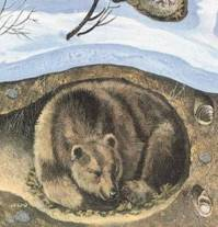 Картинки зверей которые спят зимой